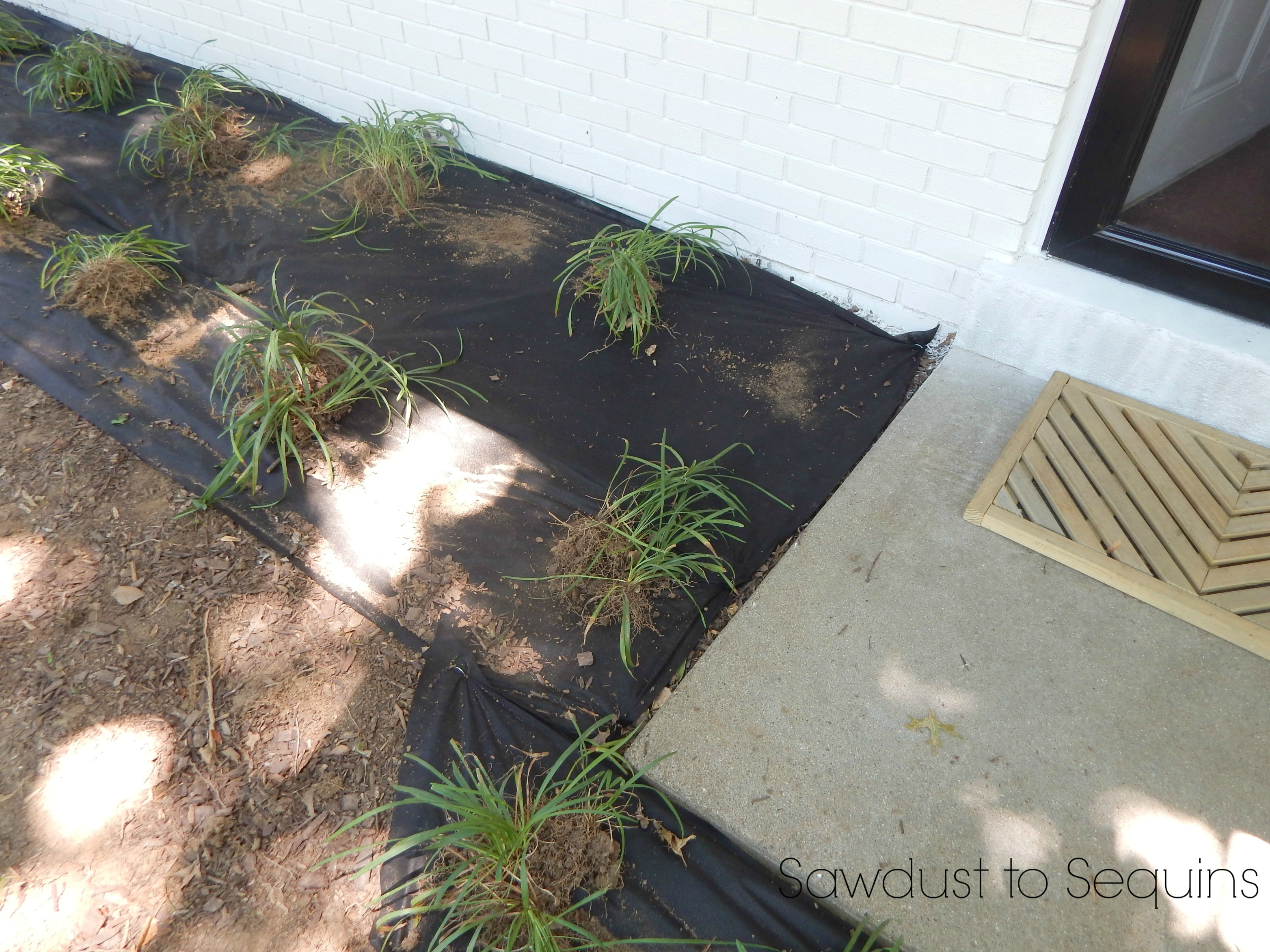 Diy landscaping reusing old plants for a new look for Cheap bushes for landscaping
