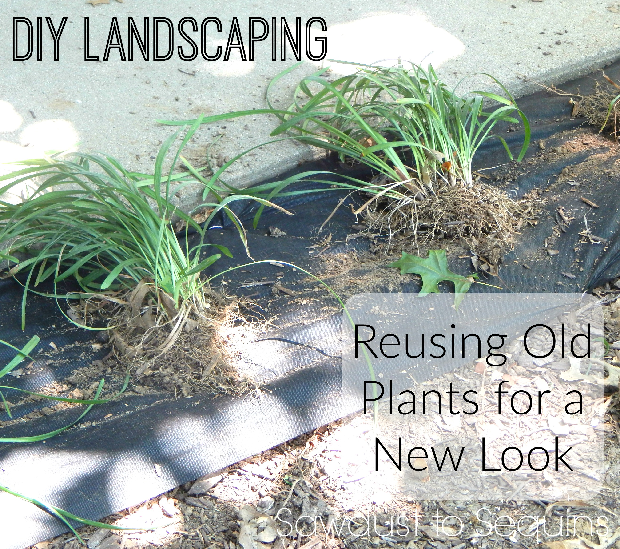 diy landscaping on the cheap sawdusttosequins com. DIY LANDSCAPING   REUSING OLD PLANTS FOR A NEW LOOK   Sawdust to